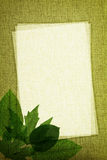 Green leaves on fabric texture Stock Photo