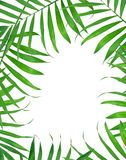 Green leaves of fern Royalty Free Stock Photos