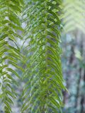 Green leaves fern on blurred of nature background. Closeup green leaves fern on blurred of nature background stock photo