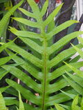 Green leaves of fern Stock Photos