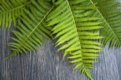 Green leaves of ferns on a dark wooden background. Green leaves of ferns on dark wooden background Royalty Free Stock Photography