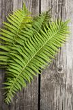 Green leaves of ferns on a dark wooden background. Green leaves of ferns on dark wooden background Stock Images