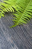 Green leaves of ferns on a dark wooden background. Green leaves of ferns on dark wooden background Royalty Free Stock Photos