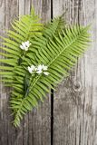 Green leaves of ferns and white flowers on dark wooden backgro. Green leaves of ferns and white flowers on a dark wooden background Royalty Free Stock Photo