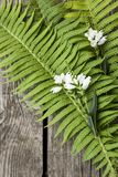 Green leaves of ferns and white flowers on a dark wooden backgro. Green leaves of ferns and white flowers on dark wooden background Stock Photos