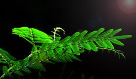Green leaves with flares Stock Photography