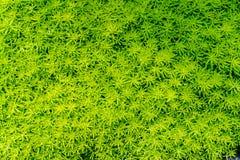 Green leaves floor Stock Image