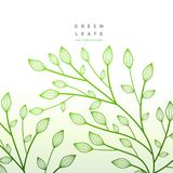 Green leaves floral decoration. nature illustration. Vector Royalty Free Stock Images