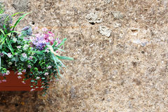 Green leaves and flowers against a wall Royalty Free Stock Image
