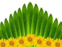 Green leaves and flowers. Green leaves and flowers backgroud Royalty Free Stock Photo