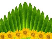 Green leaves and flowers. Green leaves and flowers backgroud royalty free stock photo
