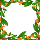 Green leaves and flowers frame Royalty Free Stock Image