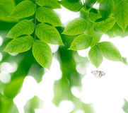 Green leaves and flying butterfly  in  sunlight Stock Image