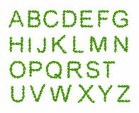 Green Leaves font, st. patrick day, clover font, Royalty Free Stock Photos