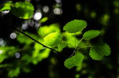 Green leaves in the forest. In city Kouvola, Finland. Nice blurry backround Stock Photography