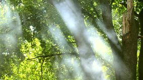 Green leaves in the forest and rising smoke from the fire on a sunny day summer. Background stock footage