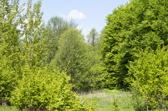 Green leaves of forest trees Royalty Free Stock Photos