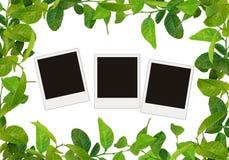 Green leaves frame stock illustration
