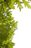 Green leaves frame Stock Image