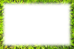 Green Leaves Frame. A Green Leaves Border on White Background Royalty Free Stock Photos