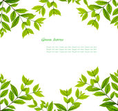 Green leaves frame. Green Leaves over white background with space for your text Royalty Free Stock Photo