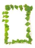 Green leaves frame Stock Photo