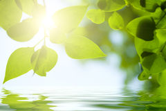Free Green Leaves Frame Royalty Free Stock Photo - 28626345