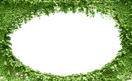 Green leaves frame background Stock Photos