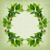Green leaves frame on canvas Stock Photography