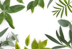 Green leaves frame of different exotic plants isolated on white Royalty Free Stock Photo