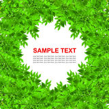 Green leaves frame isolated Royalty Free Stock Photo