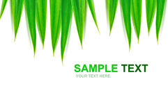 Green leaves frame isolated Royalty Free Stock Photos