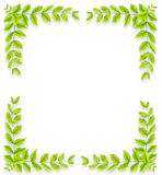 Green leaves frame isolated on white background Royalty Free Stock Image