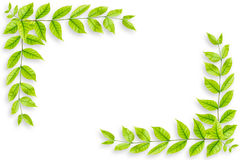 Green leaves frame isolated on white background Royalty Free Stock Images