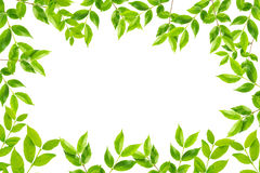 Green leaves frame isolated Stock Photography