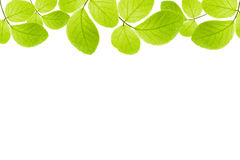Green leaves frame isolated Stock Photos