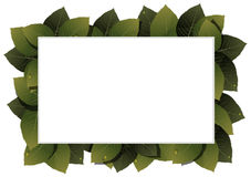 Green leaves frame. Lush foliage with water drops on a white background Royalty Free Stock Photography