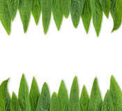 Green leaves frame Royalty Free Stock Photography