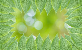Green leaves frame with selective focus background Royalty Free Stock Photo