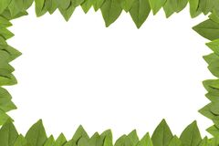 Green leaves frame with white background. With copy space Stock Images