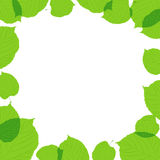 Green leaves frame on the white background Royalty Free Stock Photo