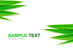 Green leaves frame  Stock Images