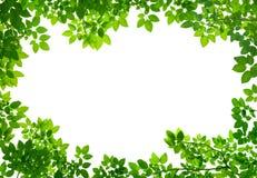 Green Leaves frame on white Stock Images