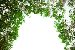 Green leaves frame on white background with place for text Stock Photography