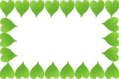 Green leaves frame with white background Stock Image