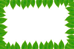 Green Leaves Frame With White Background Royalty Free Stock Image