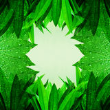 Green leaves fresh nature background Royalty Free Stock Photography