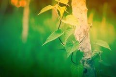 Green leaves fresh  spring nature wallpaper background. Green leaves fresh green plant spring nature wallpaper background royalty free stock images