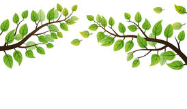Green leaves frond Royalty Free Stock Images