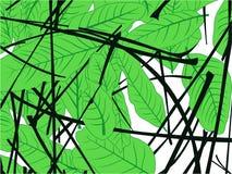 Green leaves in the garden vector illustration